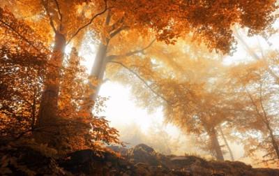 Οξιές, Φύση, Image Gallery