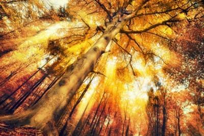 Γοητευτικό δάσος, Φύση, Ταπετσαρίες Τοίχου