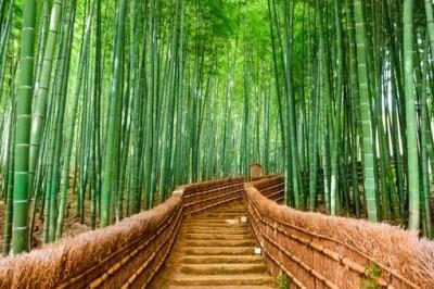 Δάσος από Μπαμπού