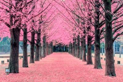 Ροζ δέντρα, Νησί  Nami