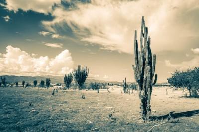 Κάκτος στην έρημο