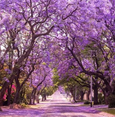 Δρόμος στην Φύση
