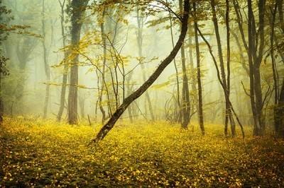 Δάσος στην Κριμαία, Φύση, Ταπετσαρίες Τοίχου