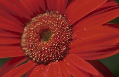 Κόκκινο λουλούδι