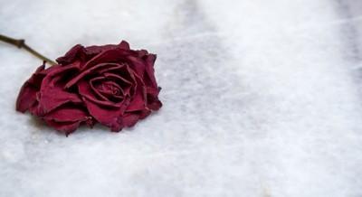 Αποξηραμένο τριαντάφυλλο