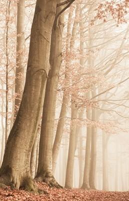 Ομίχλη στο δάσος