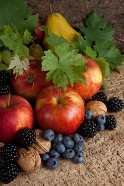 Φθινοπωρινά φρούτα