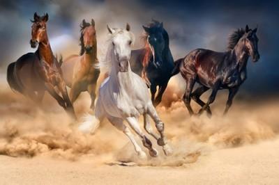 Κοπάδι από Άλογα, Ζώα, Image Gallery
