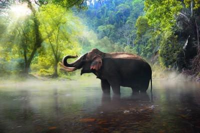 Ελέφαντας, Ζώα, Image Gallery