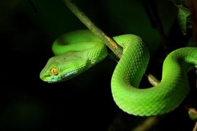 Φίδι, Ζώα, Image Gallery