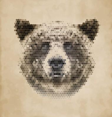Αρκούδα, Ζώα, Image Gallery