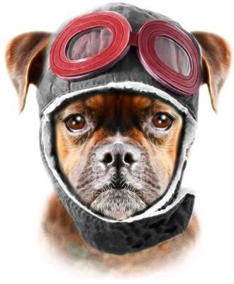 Σκύλος, Ζώα, Image Gallery